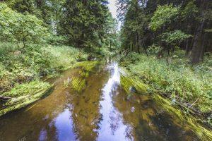 spływy kajakowe gauja